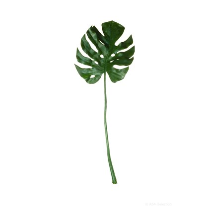 List ASA Philodendron 83 cm_0